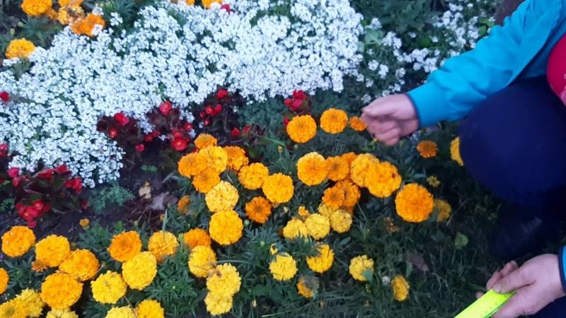 Цветы на клумбе с июня до октября