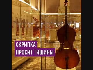 Скрипка просит тишины