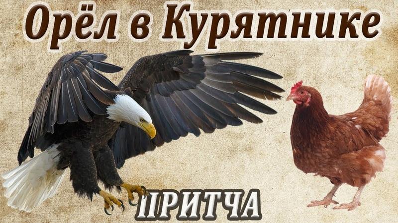Орёл в курятнике мудрая притча о предназначении человека и его самооценке