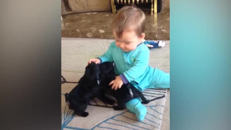Очаровательный ребенок играет с щенками