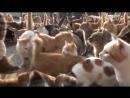V-s.mobiПРИКОЛЫ С КОТАМИ ТОПовая подборка 2016 СМЕШНЫЕ КОТЫ И КОШКИ 2016 FUNNY CATS Compilation 2016 30.mp4