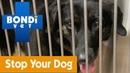 Как защитить питомца от поедания опасных предметов How To Prevent Your Pet From Eating Harmful Objects