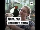 «Дно болота» — приют, где спасают птиц