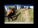 собачьи бои в Пакистане жесткие кадры