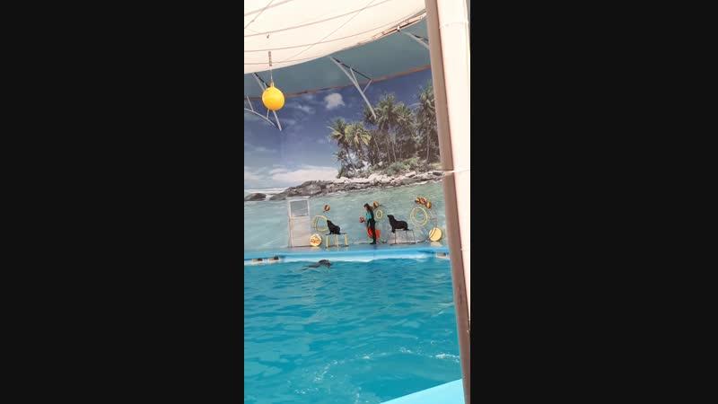 част 1 дельфинарий Немо г Алушта