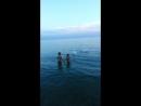 Пара лебедей. Черное море.