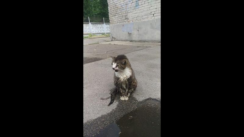 Сегодня утром в Риге увидел кота, не знал что делать. Куда нести тоже, написал в Фейсбуке пост.