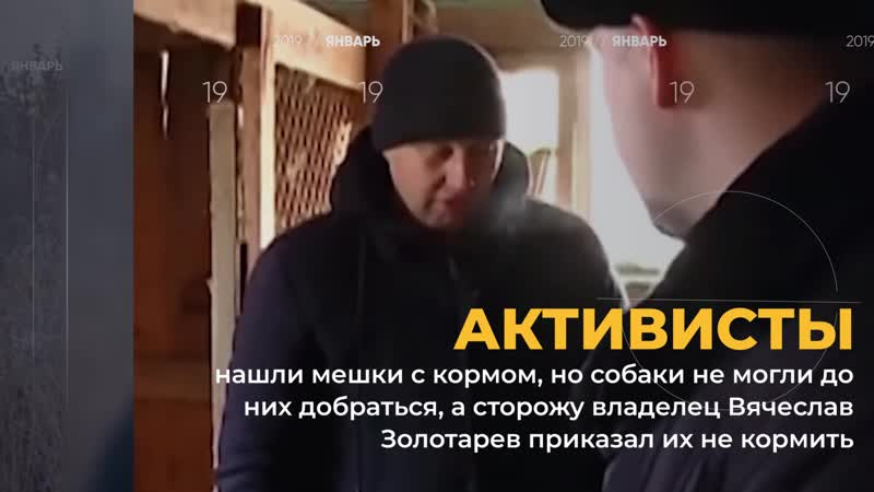 В Благовещенске задержали владельца приюта в котором десятки собак умерли от голода