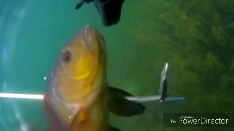 Тургояк Подводная охота