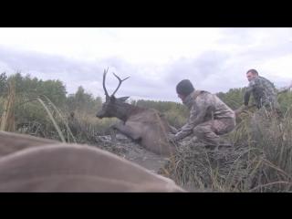 U.S. Marines help to get a young elk out of a mud holl. Морские пехотинцы США помогли молодому лосю выбраться из ямы.