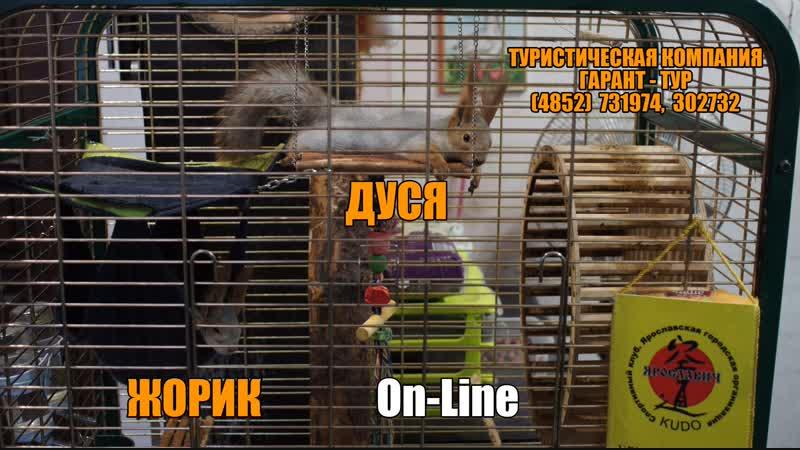 Live ДУСЯ и ЖОРИК алтайская парочка в офисе туркомпании ГАРАНТ ТУР