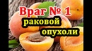Косточки абрикоса Враг раковой опухоли