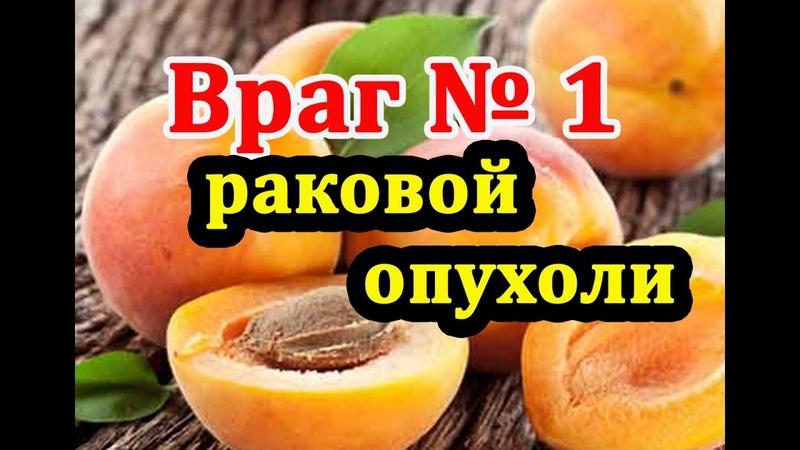 Косточки абрикоса. Враг раковой опухоли