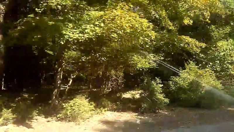 1 Самурский лес по дороге в поселок Приморский (Приморск), сентябрь 2018 | Южный Дагестан