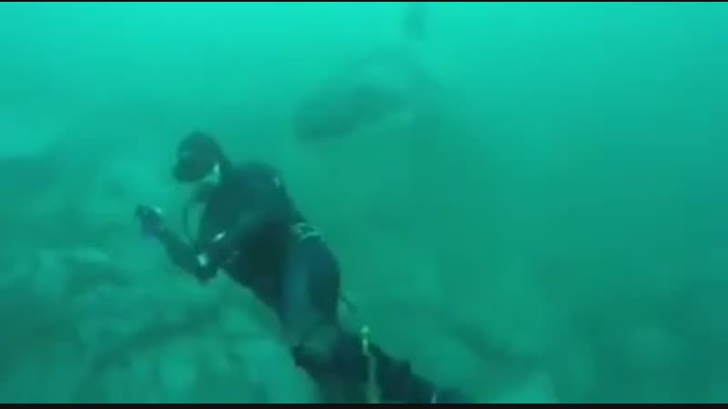Close call with a shark in Cozumel