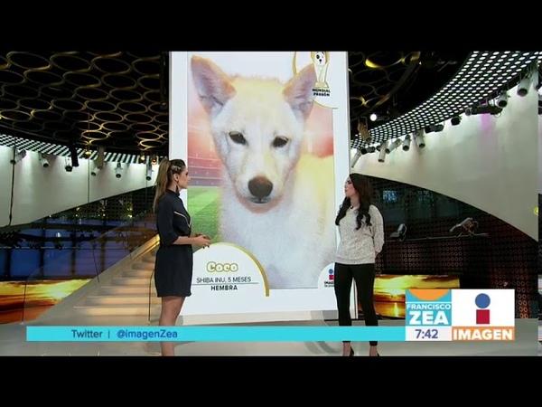 ¡Adopción de perros con el Mundial Perrón! | Noticias con Paco Zea