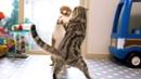 아빠와 아들 고양이가 춤추는걸까 싸움일까