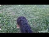 Начальная дрессировка щенков (4,6 месяцев ). Основной метод - Наталкивание.