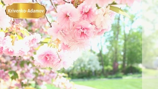 Spring l Spring music, spring relaxation, beautiful music, piano, new music 2019