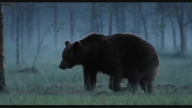 Россия — царство тигров, медведей и вулканов ⁄ Russland.