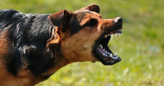 Если на вас нападает собака.