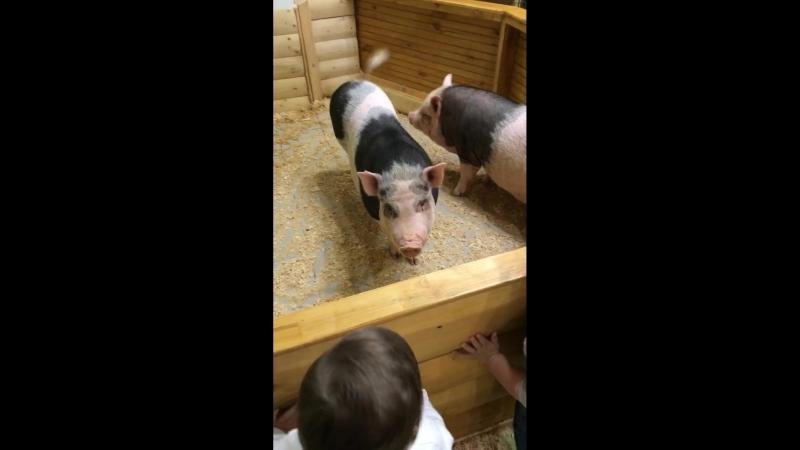 Наши детки в зоопарке 03.10.18