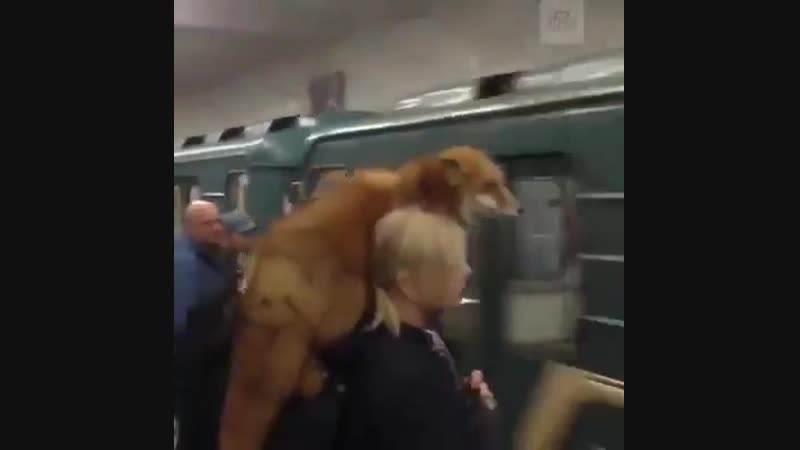 Тем временем в Московском метро...