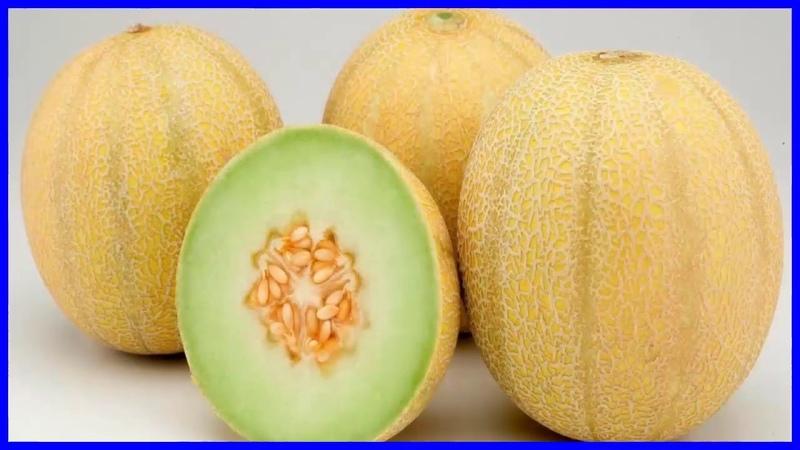 Por qué Debes Comer Melón - Beneficios y Propiedades del Melón