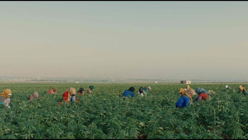 Documentary on the communities that harvest red hash in Lebanon | Heart Of Sky | 43 Short Film