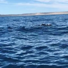 """Гид Аргентина и Южная Америка on Instagram: """"Когда говорят мы были на китах, мы видели китов...то должно быть как минимум вот так!!! Спасибо за эту..."""