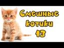 😺 Смешные котики 13