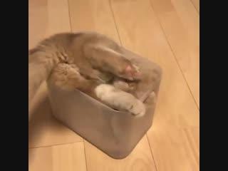 И не отговаривайте! Я буду спать здесь!