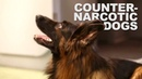 Counter-narcotics training for dog handlers