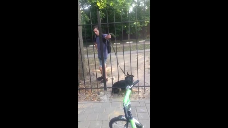 В городе Орёл шизик который избивает собаку
