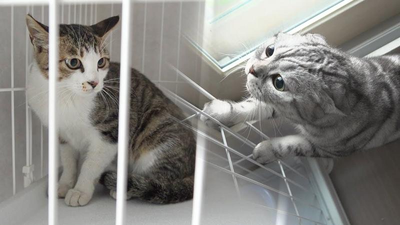 7번째 새로운 고양이 등장! 고양이들 반응【수리노을 SURINOEL】