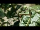 Blackmagic Pocket Cinema Camera 4K 'Bugs'