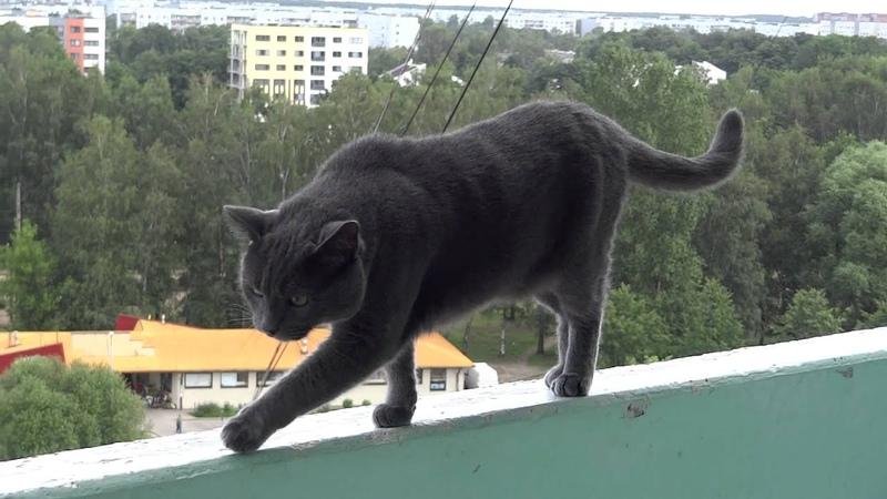 Кот ходит по краю лоджии 12 этажа