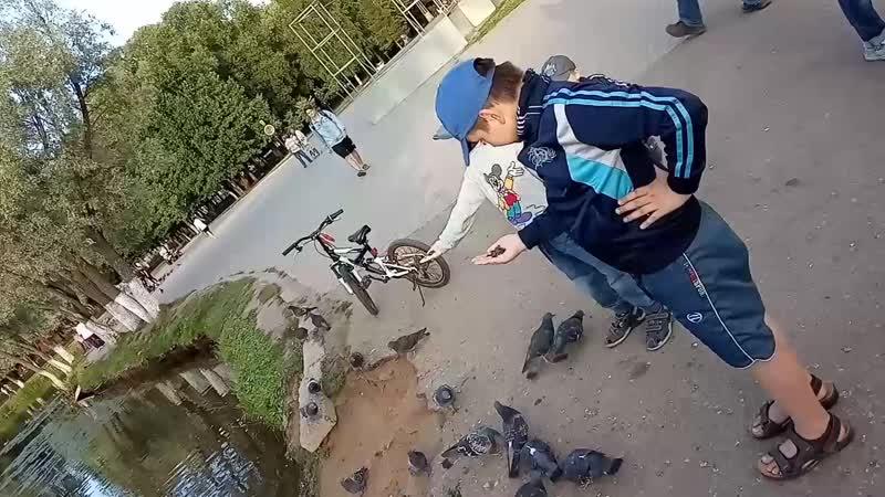весело кормим птиц