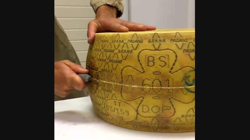 Производство итальянского сыра Грана Падано ghjbpdjlcndj bnfkmzycrjuj cshf uhfyf gflfyj