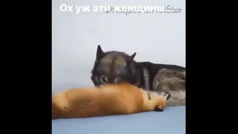 девочки такие девочки)