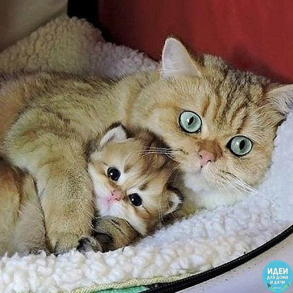 Мама  она и у животных мама