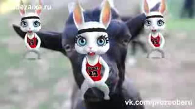 Черная Коза! Веселая заводная прикольная песня переделка попурри от ZOOBE Муз За_low.mp4