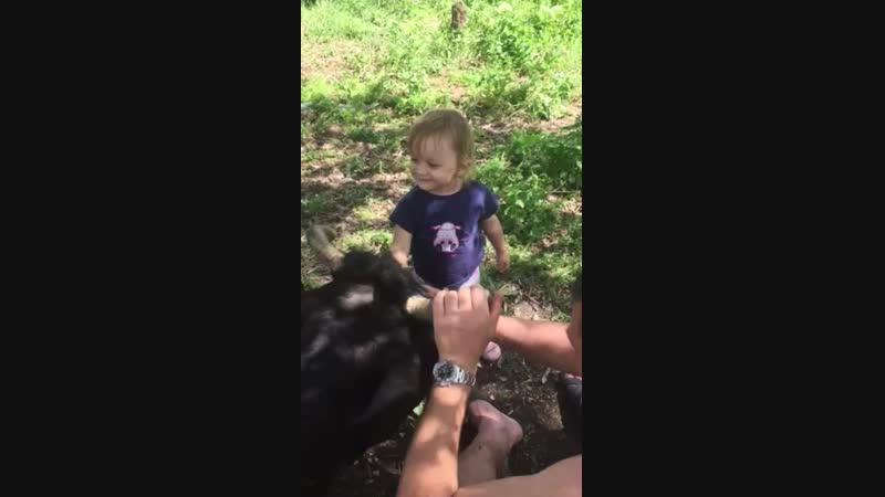 Пасха 2018 г Ангелина знакомится с коровкой , 2 года