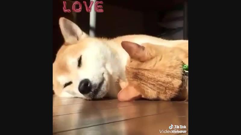 Это любовь ❤️