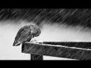 _Cold_ - Jorge Méndez (Sad Piano Violin Instrumental) (1080p_30fps_H264-128kbit_AAC)