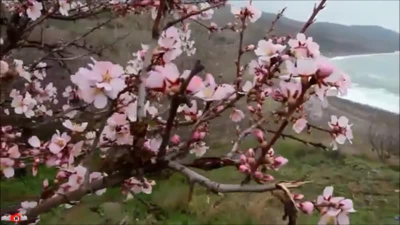 Геннадий Каменный - Хороши весной в саду цветочки