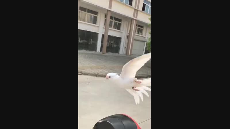 Птицы в свободном полёте