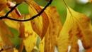 Октябрь в моём сердце... музыка - Р. Паулс, тема из к/ф Долгая дорога в дюнах