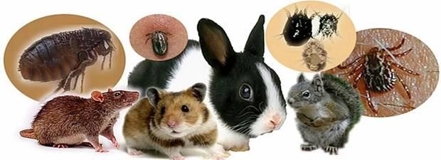 туляремия животных фото традиционных