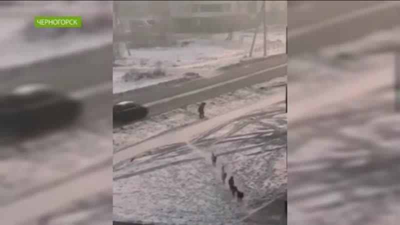 В Черногорске стая собак продолжает охотиться на людей